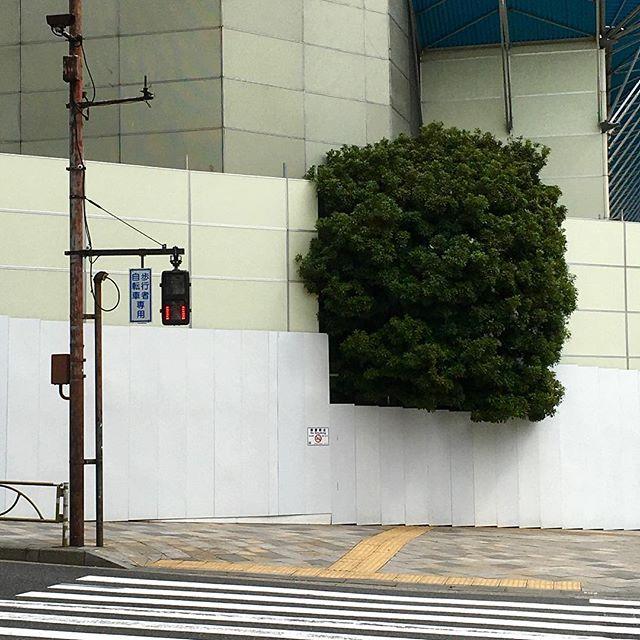 0959 南青山3丁目(20160408) #tokyo