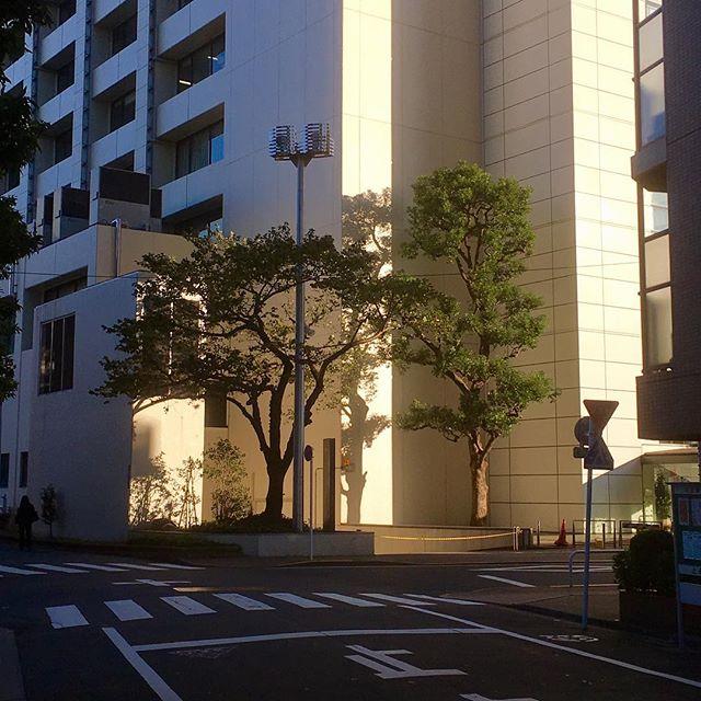 1533 東上野4丁目(20161103)